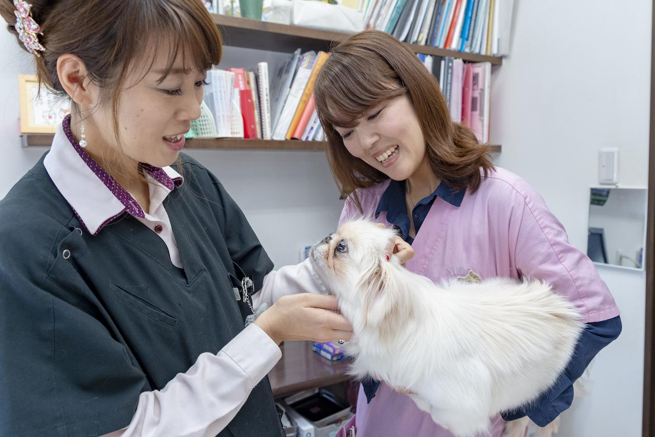 らむ動物病院にて健康チェックを受ける保護犬